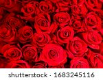 Blurry red floral background. Red roses background. Texture of red flowers. Top view on red roses. Close-up, cropped shot, horizontal. Nature's beauty. - stock photo