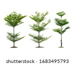 isolated trees on white...   Shutterstock . vector #1683495793