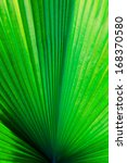 Palm Leaf Background And Texture
