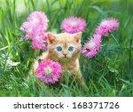 Stock photo cute little kitten sitting in flower meadow 168371726
