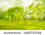 Blurred Photo. Green Trees...