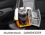 Pet Carrier In The Car On The...