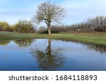 "A large budding oak tree reflects in the calm waters of a pond in central Texas near Anson, part of ""The Big Country"""