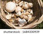 Basket Of Edible Mushrooms ...
