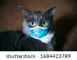 Cat in a medical mask....