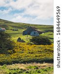 Gorse On The Falkland Islands