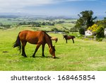 horse on a farm  new south... | Shutterstock . vector #168465854