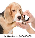 Person Cutting Dog Toenails....