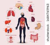 human internal organs icons set.... | Shutterstock .eps vector #1684765963