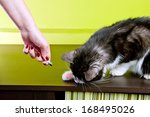 Stock photo cat playing with laser pointer red dot 168495026
