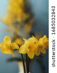 Bouquet Of Yellow Daffodils An...