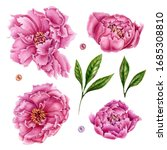 Illustration With Pink Peony...