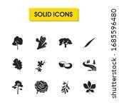 natural icons set with acacia...