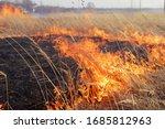 Last Year's Dry Burning Grass...
