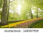 Colorful Spring Flowers And...