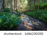 Flat Brook In The Forest While...