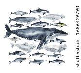 Set Of Cetaceans Painted In...