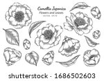 camellia japonica flower and... | Shutterstock .eps vector #1686502603