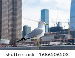 Seagull On A Perch Along The...