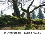 Dartmoor England  Spring....