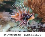 Close up view of a clearfin...