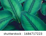 Green Leaves Nature  Background ...