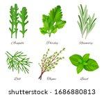 Herbs Realistic. Green Food...