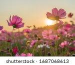 Flower Field In Summer.scenery...
