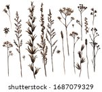 watercolor set of vintage dry... | Shutterstock . vector #1687079329