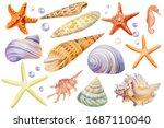 Watercolor Set Of Seashells ...