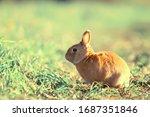 Spring Rabbit In A Green Field...