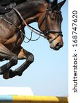 close up of brown show jumping... | Shutterstock . vector #168747620