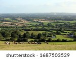 Small photo of Tory Hill, Kilkenny, Ireland. August 19,2019. A view of cattle grazing, fields and the area of South Kilkenny from Tory Hill in County Kilkenny on a summer's day.