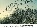 Jackdaws Go To Their ...