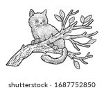 Kitten Cat Sits On A Tree...