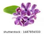 Beautiful Lilac Flowers...