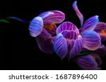 Magic Photo Of Flowers Of...