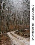 winter path | Shutterstock . vector #168800879