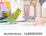 Funny Budgerigar. Cute Green...