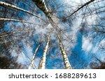Blue Sky In Spring Clouds In A...