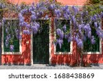 Red House With Wisteria Flowers