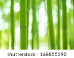 Bamboo Forest  Bamboo Forest I...