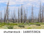 Spooky Dead Tree Forest In...