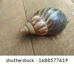 The Wooden Background Snail...