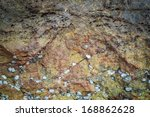 Small photo of sea oyster, acorn barnacle and planaxis on the rock