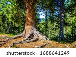 Forest tree trunk scene view....