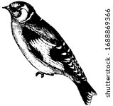 Goldfinch Is Exceedingly Docil...