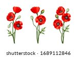 Vector Red Poppies Isolated On...