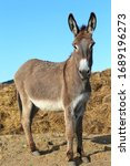 Beautiful Healthy Young Donkey...
