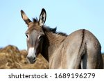 Donkey Outdoors In Nature Unde...